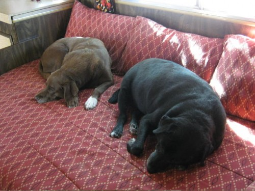 Bruno & Junior sleeping peacefully...