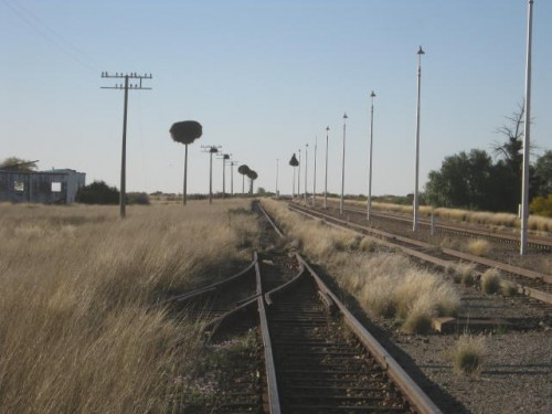 weaver nests along the railway line