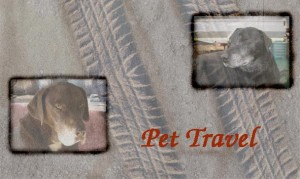 your pets can travel -Bruno & Junior did!