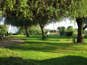 irrigation from the Orange River provides green scenery all over